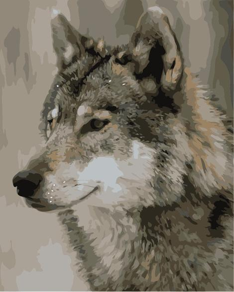 Animal Wolf Paint By Numbers Kits UK AN0036