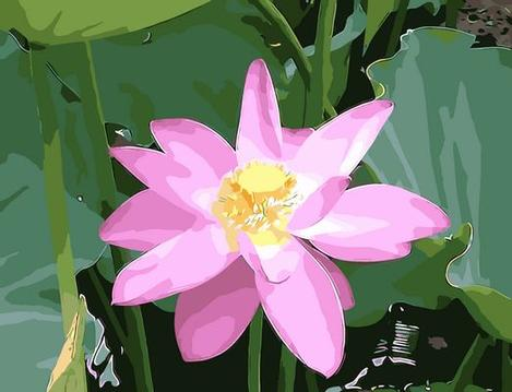 Lotus Diy Paint By Numbers Kits UK,PL0485