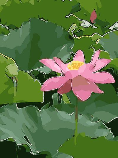 Lotus Diy Paint By Numbers Kits UK PL0487