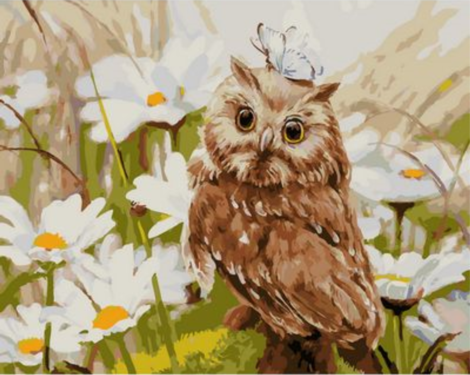 Owl Diy Paint By Numbers Kits UK FA0057