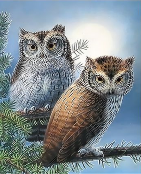Owl Diy Paint By Numbers Kits UK FA0040