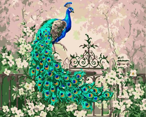 Peacock Diy Paint By Numbers Kits UK AN0666