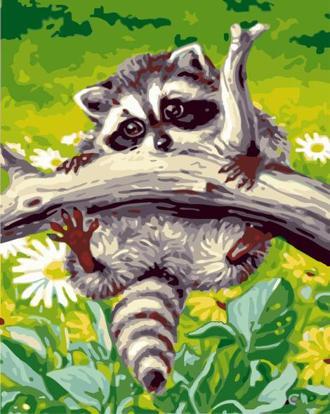 Raccoon Diy Paint By Numbers Kits UK AN0890