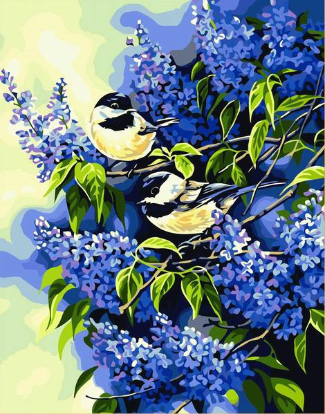 Bird Diy Paint By Numbers Kits UK FA0084