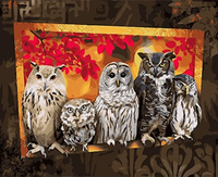 Owl Diy Paint By Numbers Kits UK VM97283