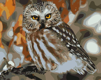 Owl Diy Paint By Numbers Kits Uk WM-340