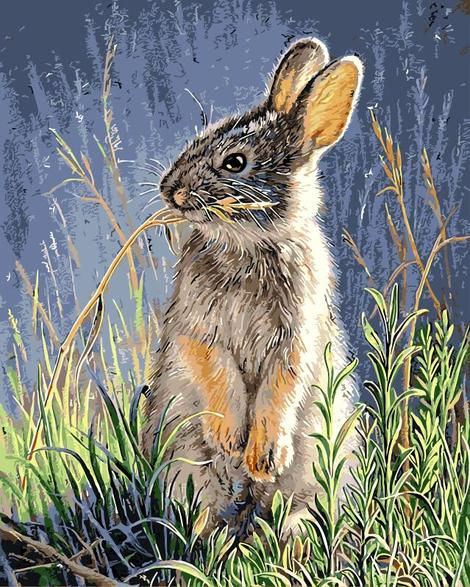 Rabbit Diy Paint By Numbers Kits UK AN0858