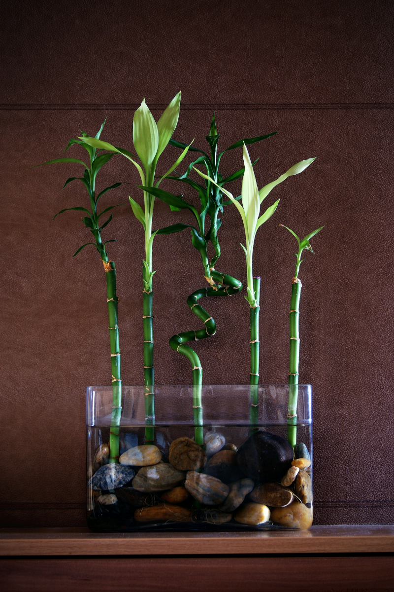 Lucky bamboo sitting in glass vase with pebbles on desk