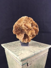 Load image into Gallery viewer, Raku Urn With Coral