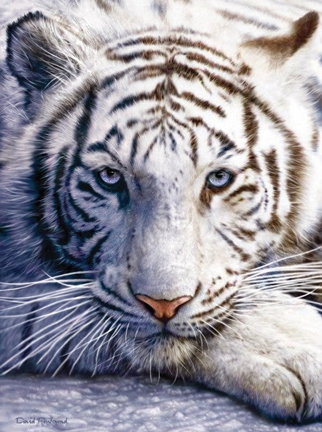 White Tiger Face 1000 piece jigsaw puzzle