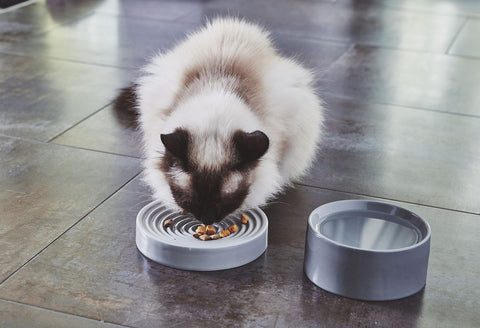 Pet Feeder Fresco Cat Bowl - Luxury Cat Feeder Available in 3 colours MiaCara - Play Offside
