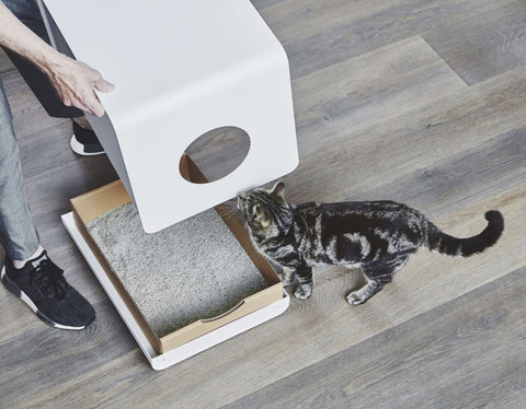 Cat Litter Smart Design & Quality Luxury Cat Litter Sito MiaCara - Play Offside