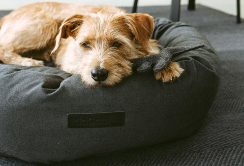 Dog Bed Orthopedic Dog Bed Rondo Available in 3 sizes & 2 colours MiaCara - Play Offside