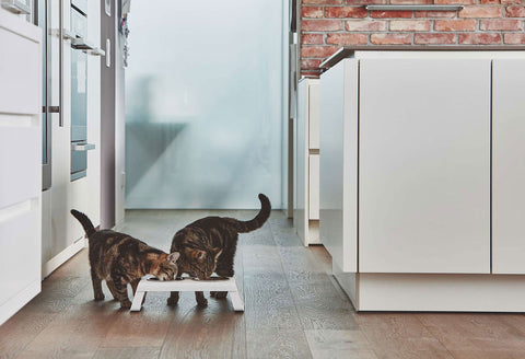 Pet Feeder Contemporary Design Cat Feeder Desco Available in 4 coulours MiaCara - Play Offside