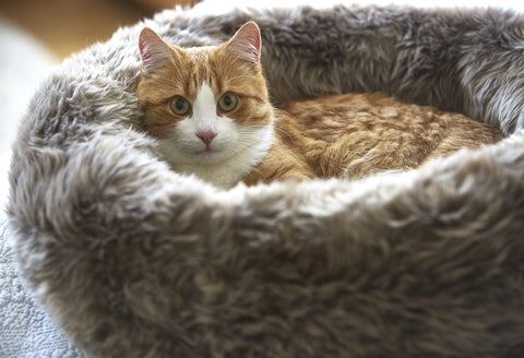 Cat Bed Luxury Faux Fur Cat Bed Lana Available in 3 colours MiaCara - Play Offside