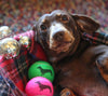 Dachshund Dog Breed Colourful Tennis Balls
