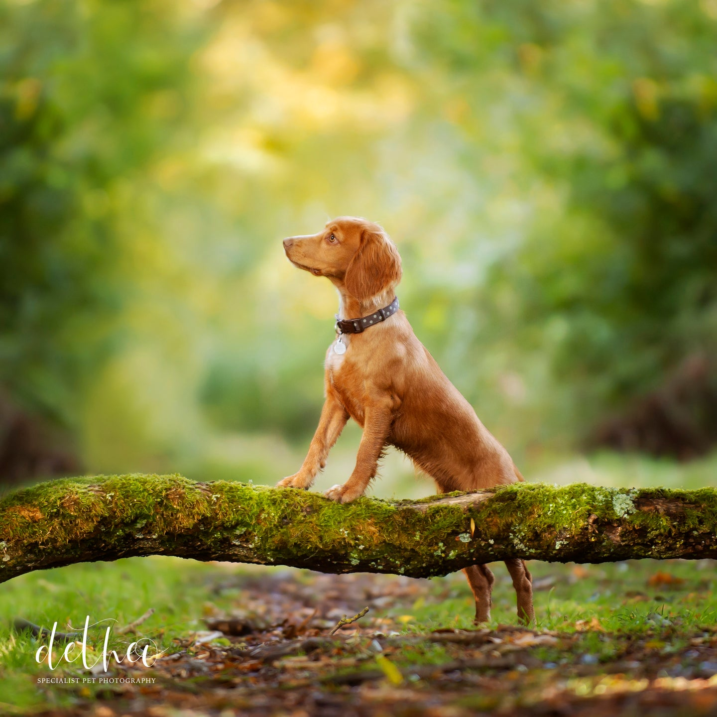 Pet Photography Session - Dogs