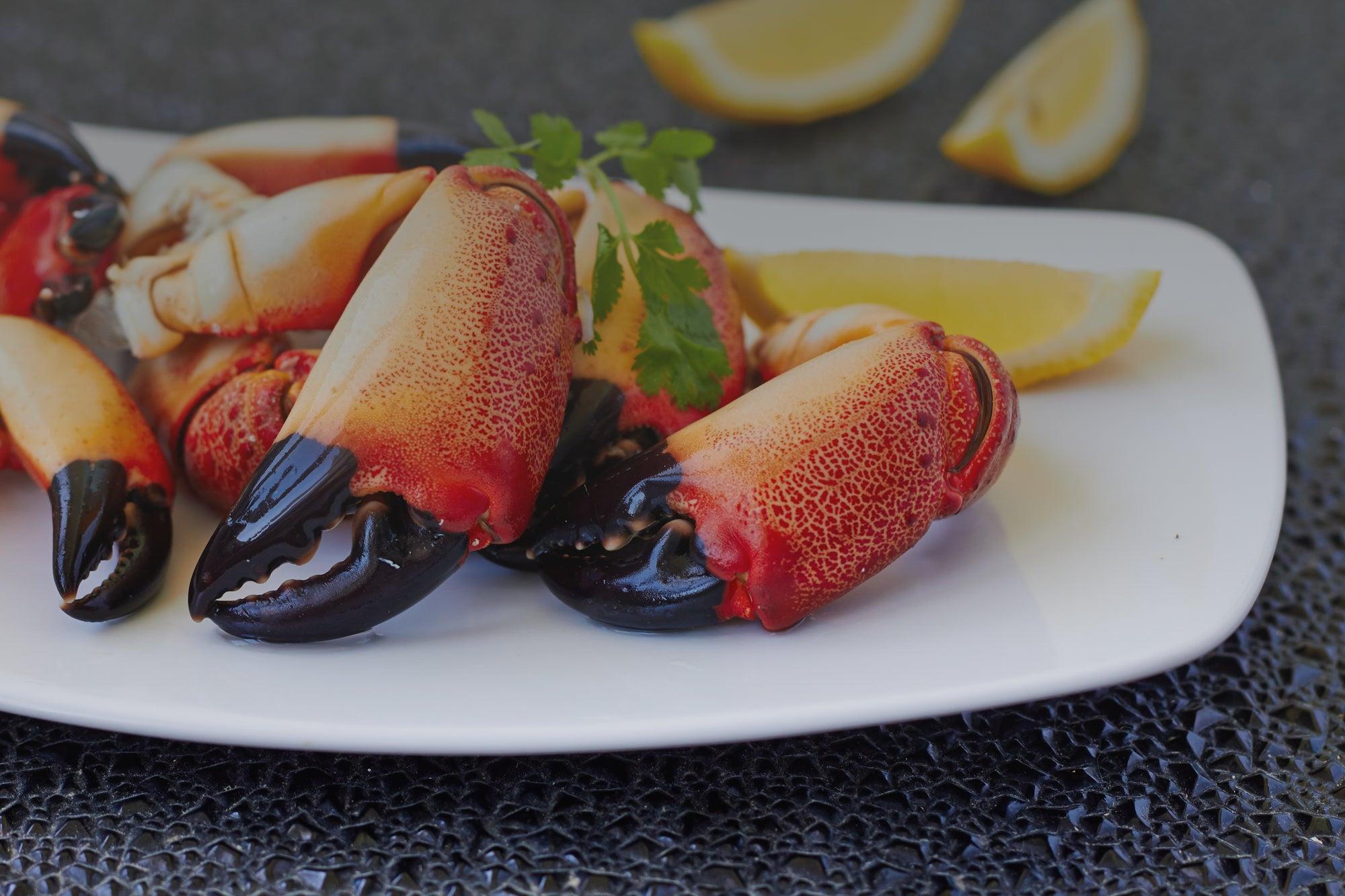 How can you tell if your Florida stone crabs are fresh? Buy from Patas fresh stone crabs delivered to your door anywhere in the US and select international locations