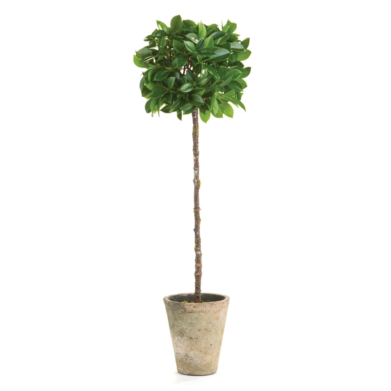 "Napa Home & Garden Ficus Topiary 27"" Potted"