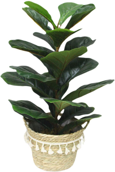 B.H Artificial Fiddle Leaf fig Tree 23.5 inch Faux ficus lyrata for Home Office Decoration