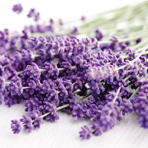 The Benefits Of Lavender For Natural Female Hygiene