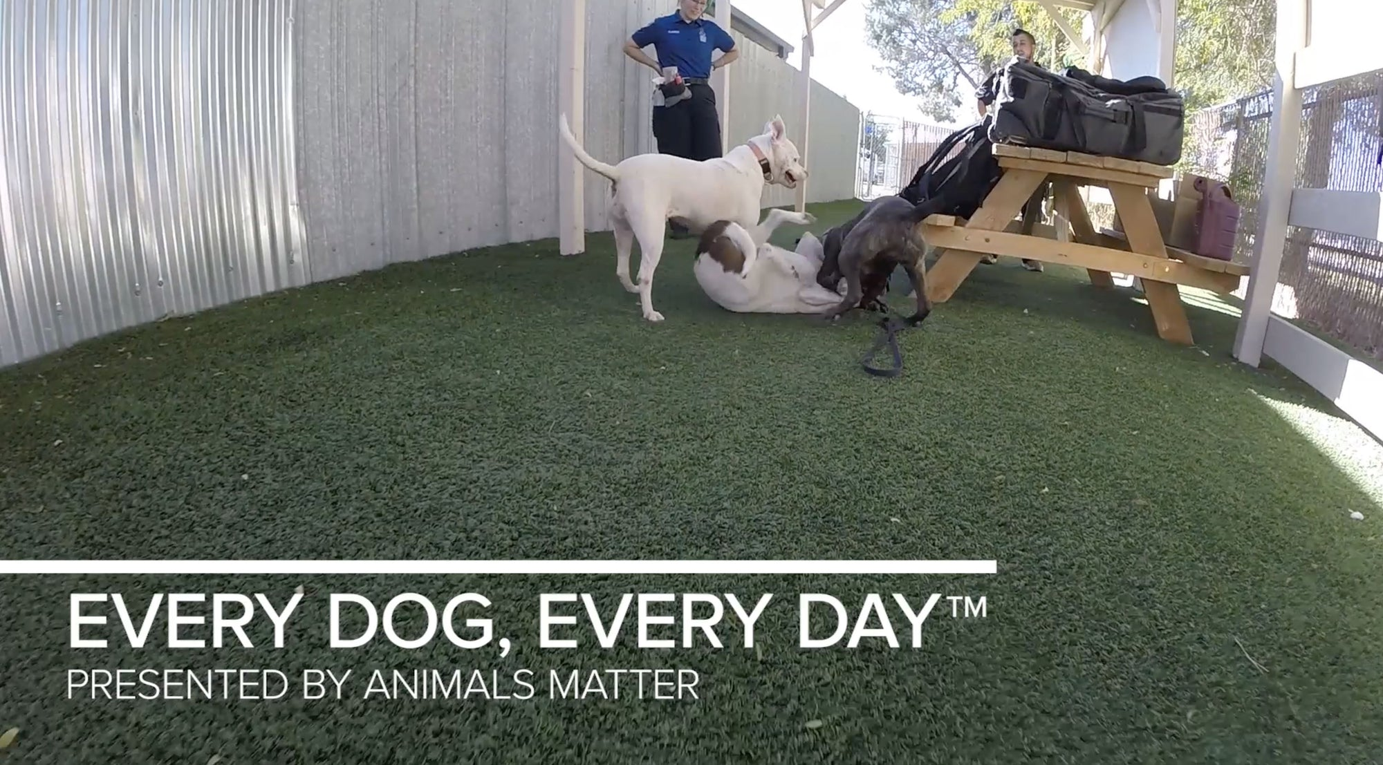 Animals Matter X Dogs Playing For Life