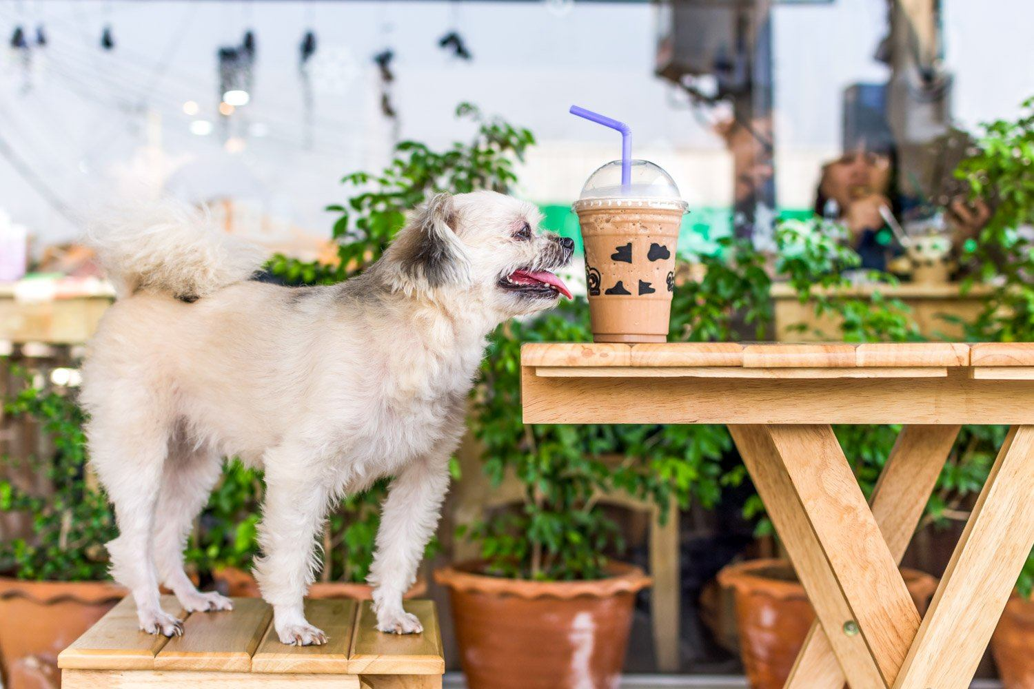 Best dog-friendly patios in California