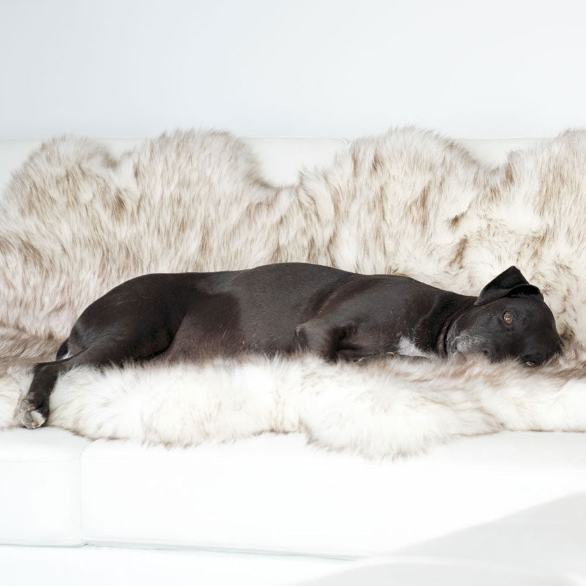 Animals Matter 174 Inc Official Site Luxury Dog Beds