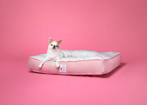 Animals Matter Too Faced Collaboration Bed Featuring Clover