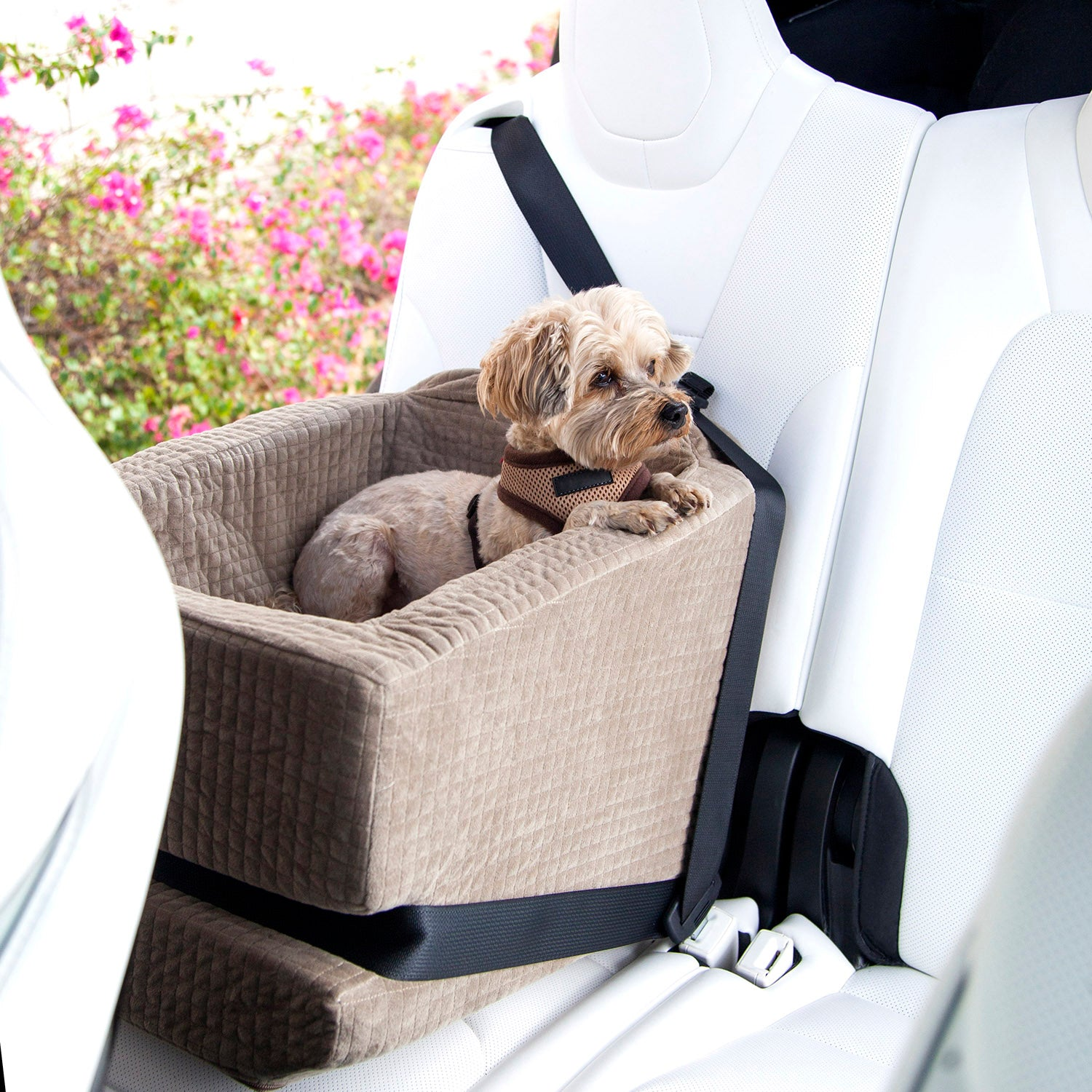 Travel in style and comfort with Animals Matter Companion Car Seat