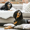 Two black hounds on faux rug shag rug and the other one a faux fur shag pillow