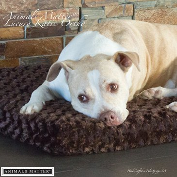 Animals Matter Katie Puff Orthopedic Rectangle Luxury Dog Bed Chocolate