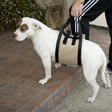 Animals Matter® Companion Mobility Harness - Animals Matter