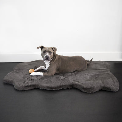 Animals Matter Ruby Orthopedic Luxury Dog Bed Rug Charcoal