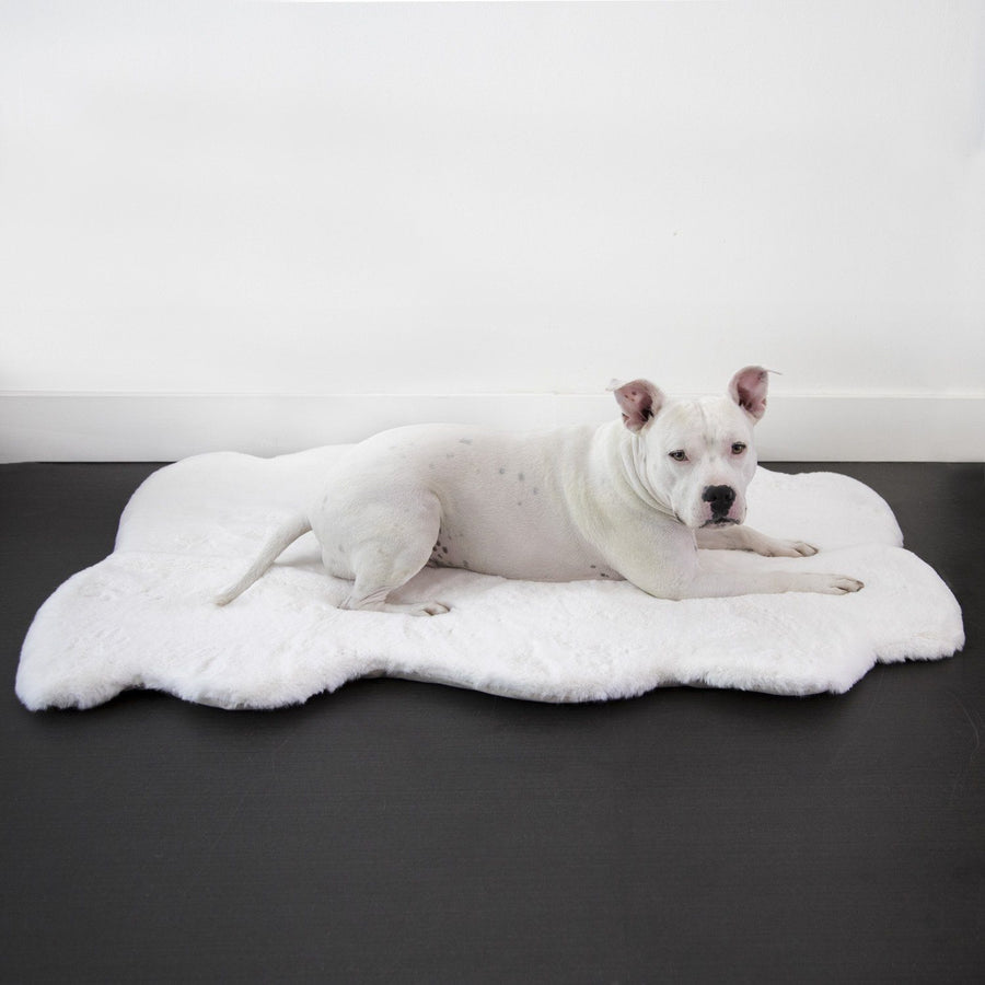 Dog Beds That Look Like Rugs: Daisy Puff™ Blanket