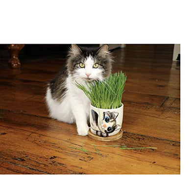 Window Garden - Sebby Cat Grass Growing Kit with Kitty Pot Planter - Purrfect for Cat and Pet Lovers.Wheatgrass Snack Includes Soil and Organic Seed. Top Quality, Super Cute Gift, Christmas, Mothers Day.