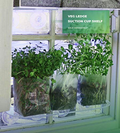 Window Garden Pop Up Microgreens Kit (Kale) – Just Add Water and Seed. Perfect Size, a Quick, Smart, Nutritious Meal. Includes Fiber Soil in a Bag, Kale Seed. Super Health Benefits, Delicious.