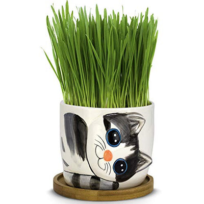 Window Garden Animal Planters - Large Kitty Pot (Sebby) Purrfect for Indoor Live House Plants, Succulents, Flowers and Herbs. Top Quality, Super Cute Planter Gift for Cat Lovers, Office, Christmas.