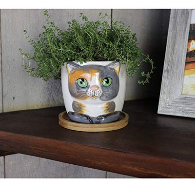Window Garden - Barney Cat Grass Growing Kit with Kitty Pot Planter - Purrfect for Cat and Pet Lovers.Wheatgrass Snack Includes Soil and Organic Seed. Top Quality, Super Cute Gift, Christmas, Mothers Day.