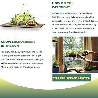 Window Garden Grow n Serve Microgreens Kit - Easy Planting and Growing, Indoor Superfood Seed Gardening, Complete with Acrylic Planter Tray, Sprouting Seeds, Fiber Soil and Spray Bottle.