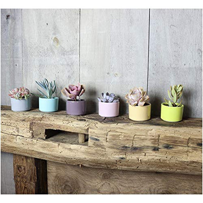 Window Garden Six Shades of Succulents Planter Pots – Slip Your Plants Into Something More Colorful. Create a Stunning Display That'll Surely Excite Your Visual Senses.