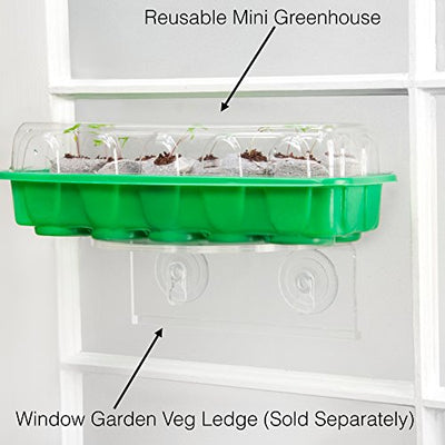 Window Garden - Red Cabbage Vegetable Starter Kit - Grow Your Own Food. Germinate Seeds on Your Windowsill Then Move to a Patio Planter or Vegetable Patch. Mini Greenhouse System - Easy. (Red Cabbage)