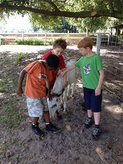 Summer Camp at Legare Farms