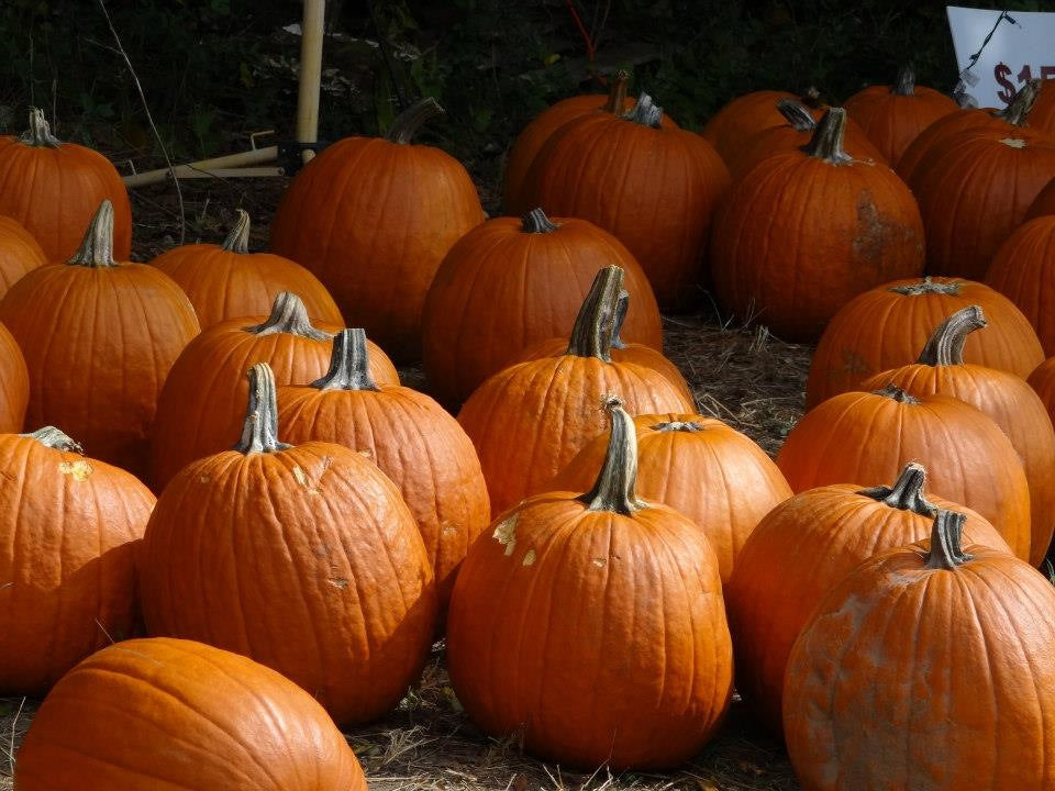 2020 Pumpkin Patch