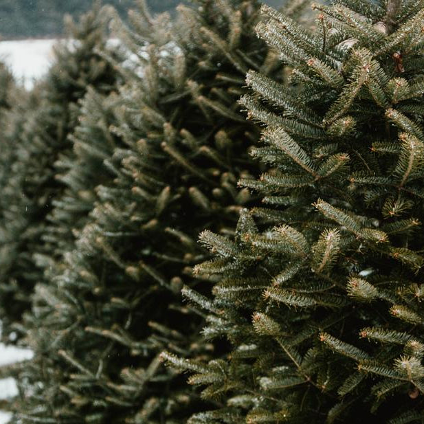 REAL CHRISTMAS TREES AVAILABLE