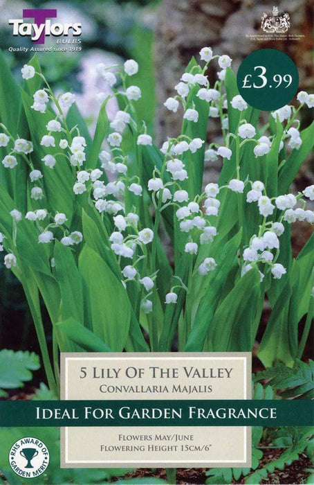 Taylors Bulbs Lily Of The Valley Taylors 5 x Lily Of The Valley Bulbs