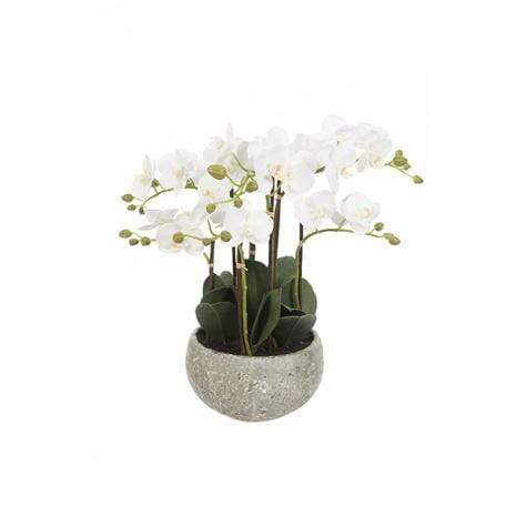 Floral Silk Orchids Phalaenopsis Centre Piece in Clay Pot