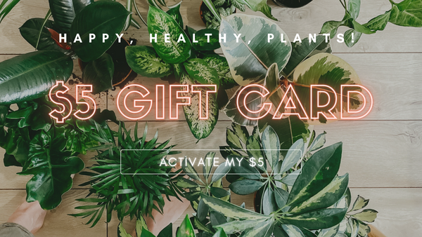 house plant gift card, plant aesthetic, indoor plants