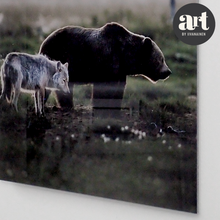 Load image into Gallery viewer, Acrylic Glass Print, A Bear and a Wolf