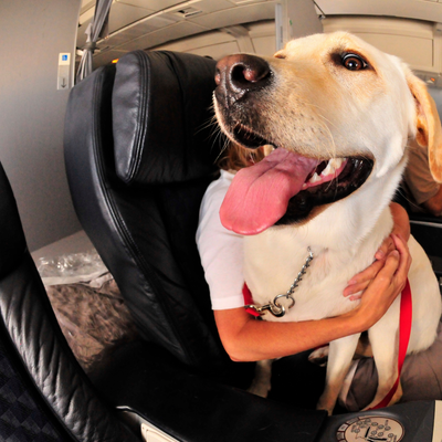 8 Tips for Flying With Your Pup!